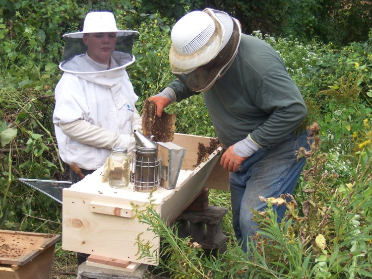 Our beekeeping friends at work installing the bees, tearing apart their old home, giving them a new place to build...